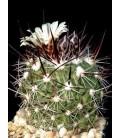 KIT ochoterenaus- cactus