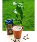 Cafea - pachet cadou