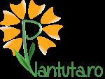 Kit-uri crestere plante